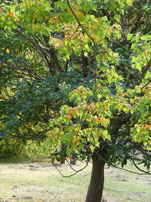 初秋の昭和記念公園その2_d0128697_1732862.jpg