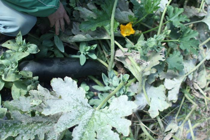 農家さんを訪ねて_d0225603_14362415.jpg