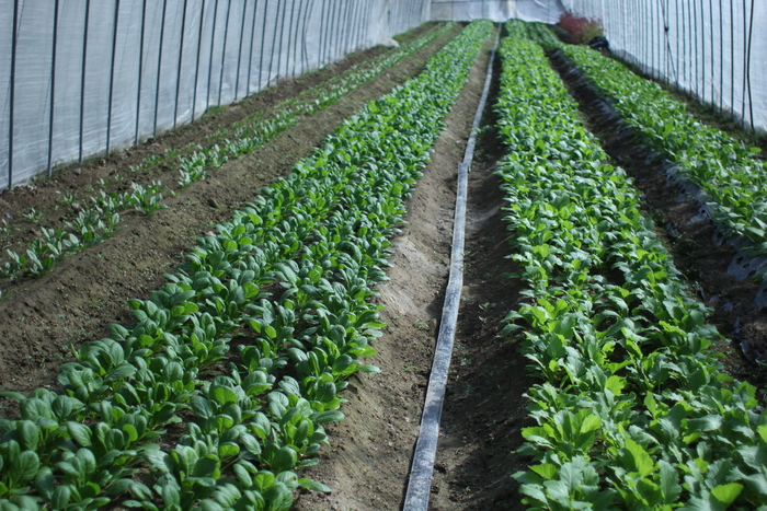 農家さんを訪ねて_d0225603_14392945.jpg