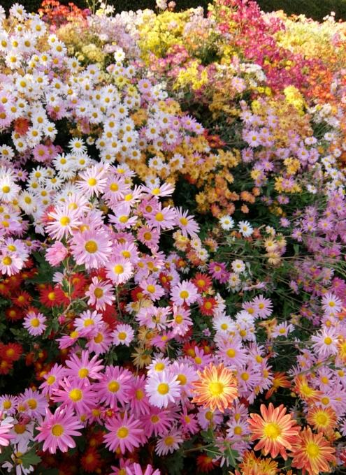 なぜか今、お花満開のセントラルパーク内にあるフランス式庭園(Conservatory Gardenの一部)_b0007805_3115413.jpg