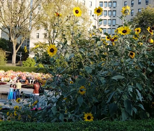 なぜか今、お花満開のセントラルパーク内にあるフランス式庭園(Conservatory Gardenの一部)_b0007805_311577.jpg
