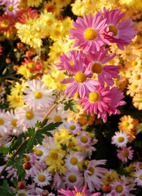 なぜか今、お花満開のセントラルパーク内にあるフランス式庭園(Conservatory Gardenの一部)_b0007805_312191.jpg