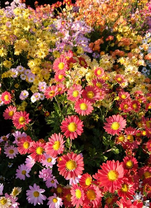なぜか今、お花満開のセントラルパーク内にあるフランス式庭園(Conservatory Gardenの一部)_b0007805_312772.jpg