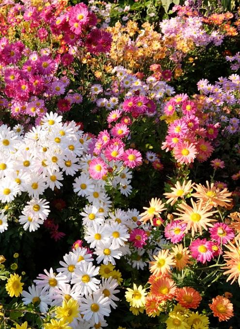 なぜか今、お花満開のセントラルパーク内にあるフランス式庭園(Conservatory Gardenの一部)_b0007805_7305152.jpg