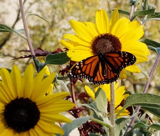 なぜか今、お花満開のセントラルパーク内にあるフランス式庭園(Conservatory Gardenの一部)_b0007805_80143.jpg