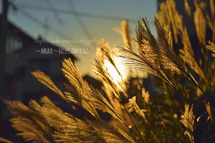 芒の季節。_f0235723_19233547.jpg