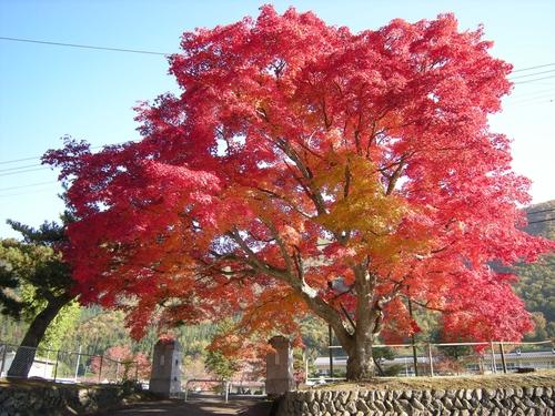 小本街道、秋から冬へ_b0206037_16362122.jpg
