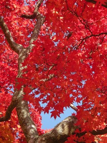 小本街道、秋から冬へ_b0206037_16362181.jpg