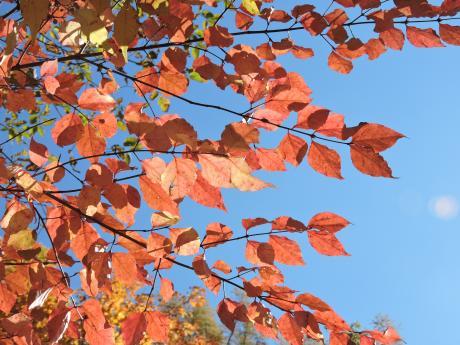 北軽井沢の秋を連れて帰ってきました。_c0341450_11564119.jpg