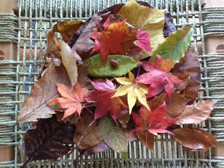 北軽井沢の秋を連れて帰ってきました。_c0341450_1158070.jpg