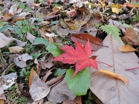 北軽井沢の秋を連れて帰ってきました。_c0341450_1252367.jpg