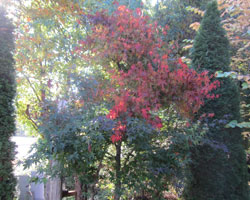 秋のおすそわけ_d0050155_9361992.jpg