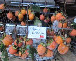 秋のおすそわけ_d0050155_9405417.jpg