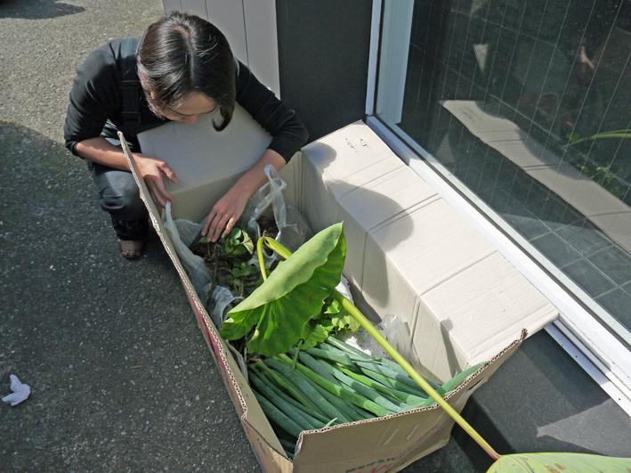 """鎌倉すざく横浜ラボラトリー訪問、野菜と竹炭 """"物々交換"""" 10・28_c0014967_2055172.jpg"""