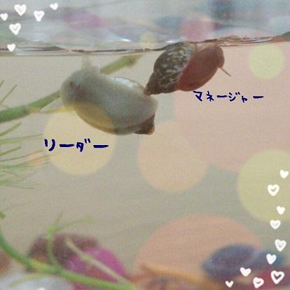 b0337573_16321344.jpg