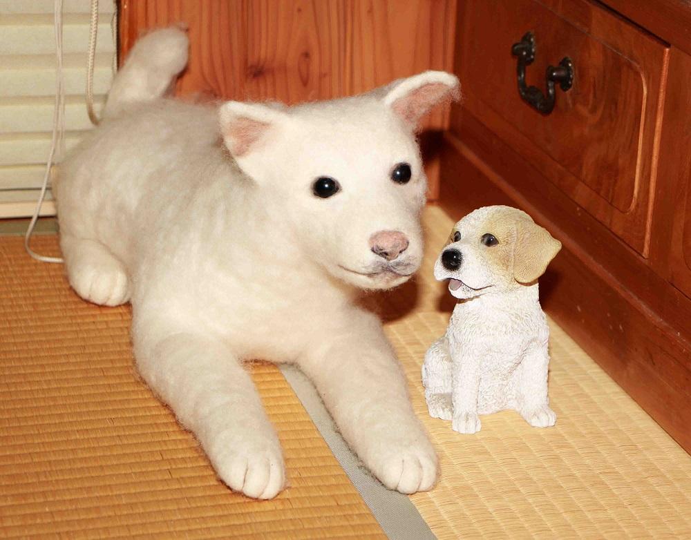 一生で一度、出会った犬 ~迷い犬だったシロ~_a0107574_18585852.jpg