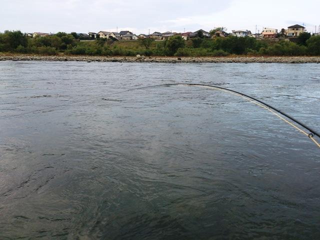 利根川冬季釣り場_c0157482_11205376.jpg