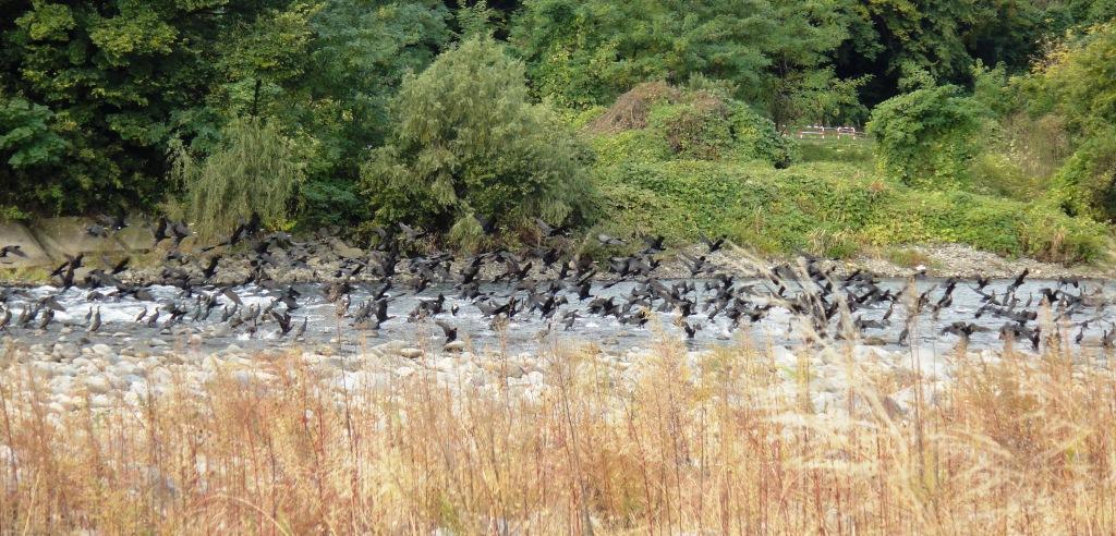 利根川冬季釣り場_c0157482_12430008.jpg