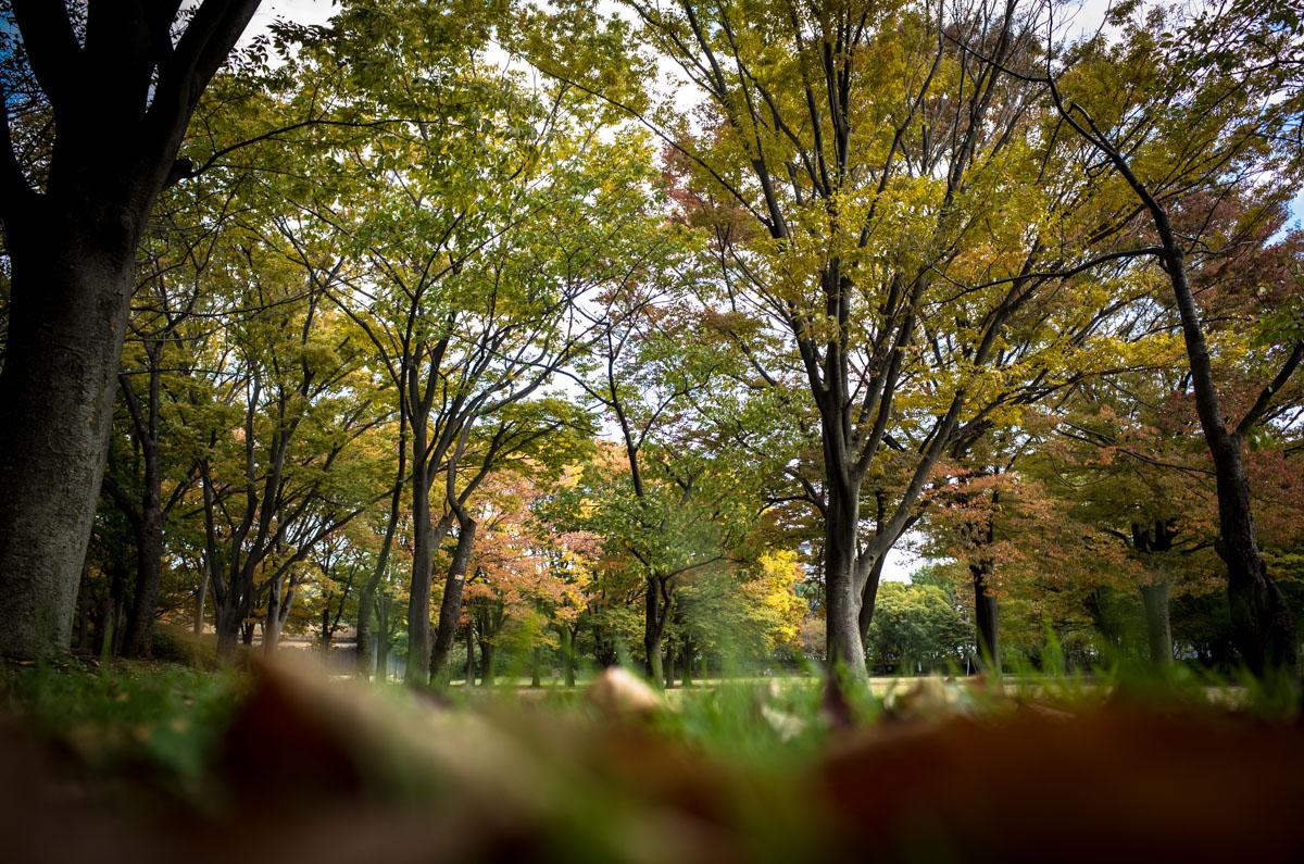 小さい秋。。。_e0139093_1627381.jpg