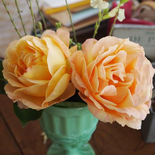 函館でもバラ咲いてます_a0292194_2104739.jpg