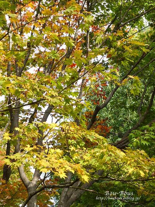 初秋の昭和記念公園その3(ラスト)_d0128697_038332.jpg