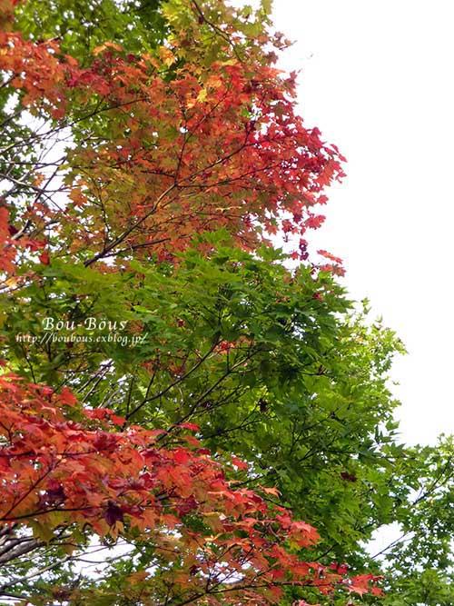 初秋の昭和記念公園その3(ラスト)_d0128697_0384081.jpg