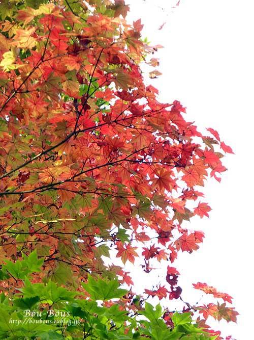 初秋の昭和記念公園その3(ラスト)_d0128697_0384656.jpg