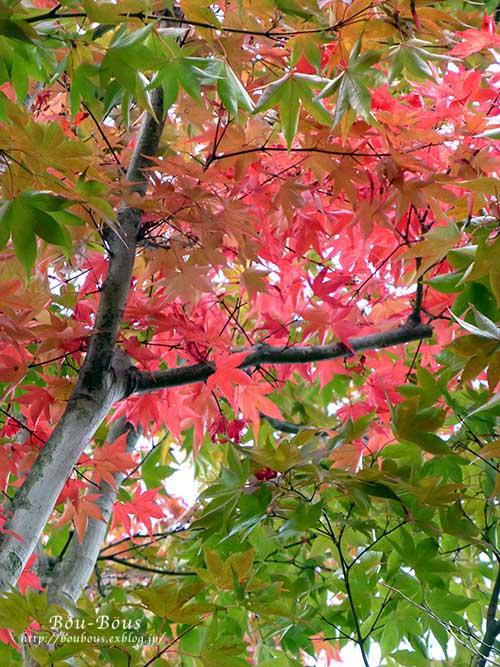 初秋の昭和記念公園その3(ラスト)_d0128697_1223520.jpg