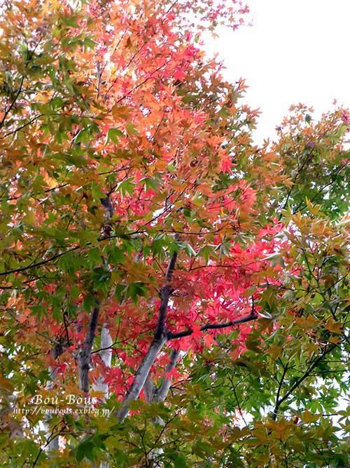 初秋の昭和記念公園その3(ラスト)_d0128697_1225384.jpg
