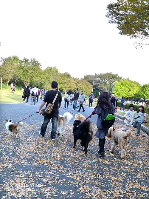 初秋の昭和記念公園その3(ラスト)_d0128697_1324635.jpg