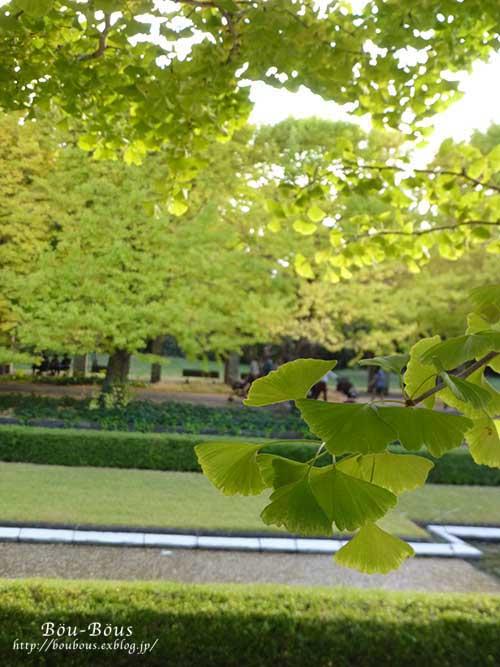 初秋の昭和記念公園その3(ラスト)_d0128697_145146.jpg