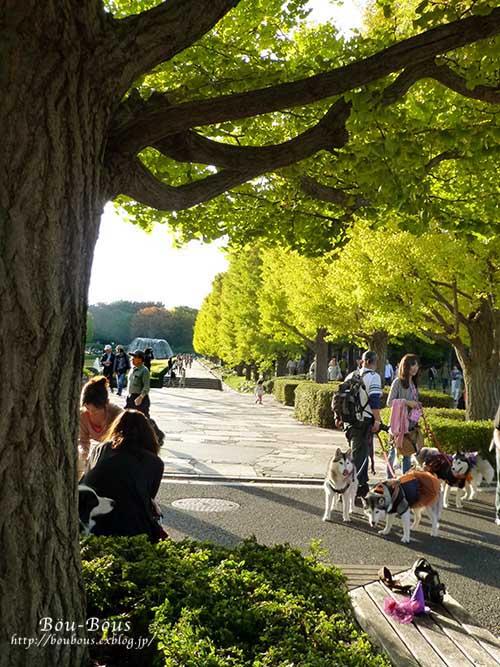 初秋の昭和記念公園その3(ラスト)_d0128697_1483831.jpg