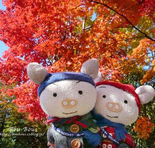 初秋の昭和記念公園その3(ラスト)_d0128697_2123968.jpg