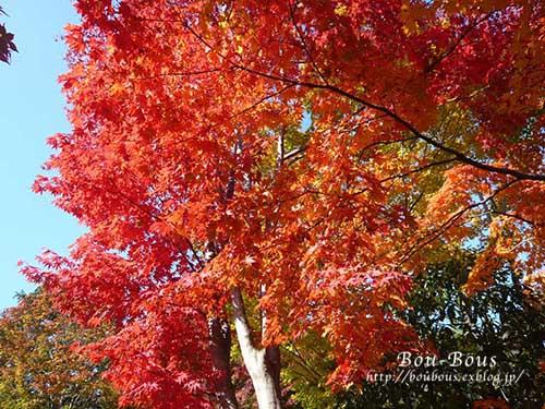 初秋の昭和記念公園その3(ラスト)_d0128697_2124679.jpg