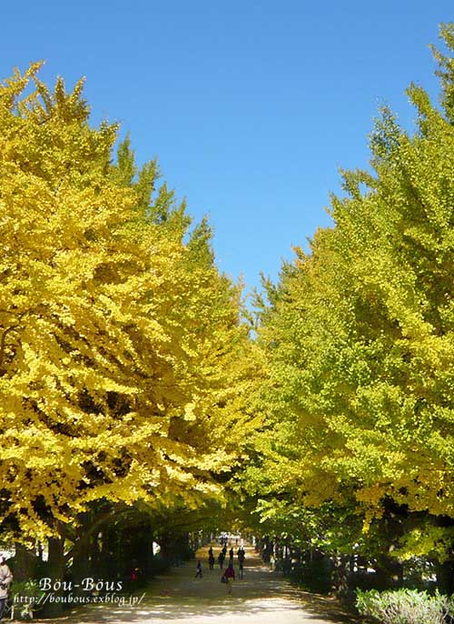 初秋の昭和記念公園その3(ラスト)_d0128697_2131221.jpg