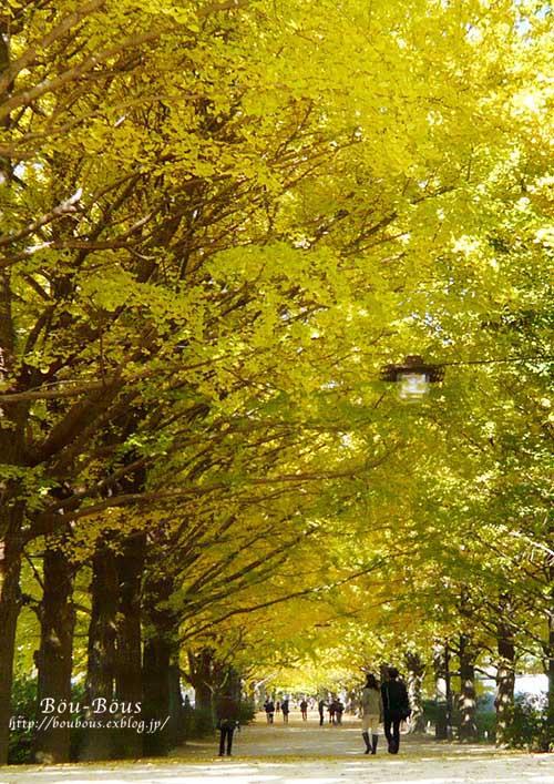 初秋の昭和記念公園その3(ラスト)_d0128697_2132558.jpg