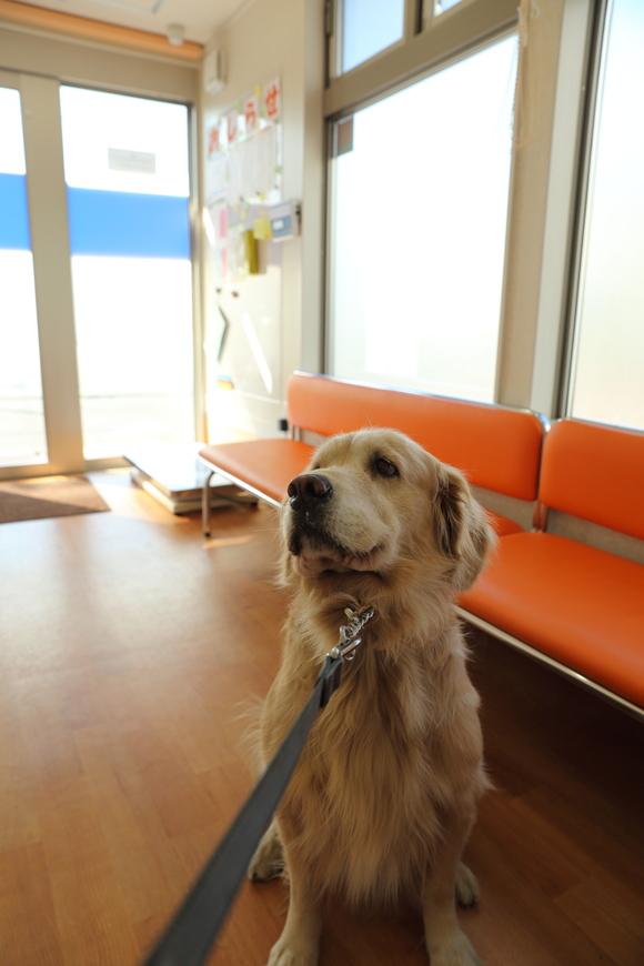 病院と柿_b0275998_13183298.jpg