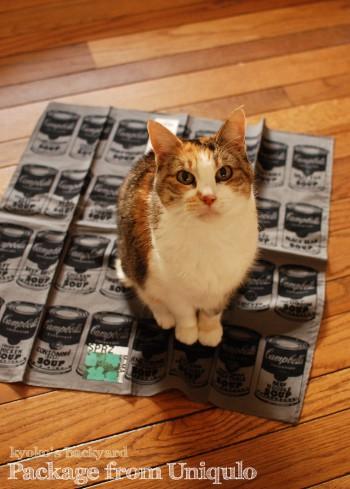 ユニクロからのお買い物。猫には箱を進呈。_b0253205_04125823.jpg