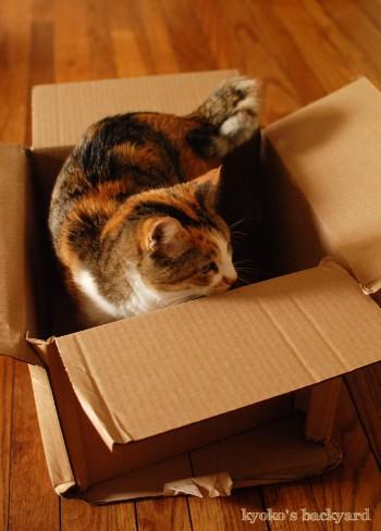 ユニクロからのお買い物。猫には箱を進呈。_b0253205_04143261.jpg
