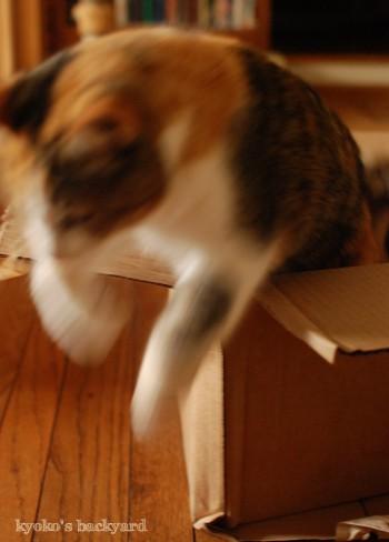 ユニクロからのお買い物。猫には箱を進呈。_b0253205_04150556.jpg