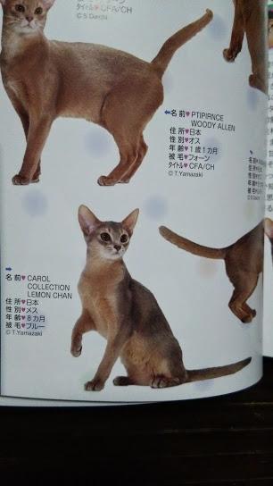 2015年 日本と世界の猫カタログ_e0033609_19144162.jpg