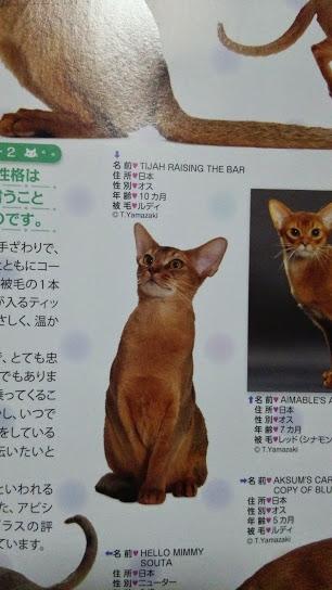 2015年 日本と世界の猫カタログ_e0033609_19145779.jpg