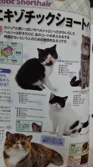 2015年 日本と世界の猫カタログ_e0033609_19152320.jpg