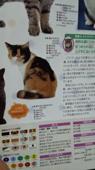 2015年 日本と世界の猫カタログ_e0033609_19154776.jpg