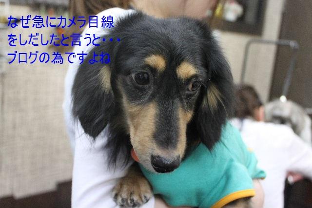 b0130018_1154409.jpg