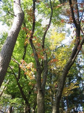 秋はいいね♪_b0100229_11202488.jpg