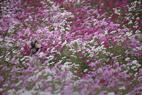 花より男子_c0275332_2151997.jpg
