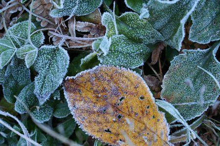 来ちゃいました 初霜。_f0114346_12484791.jpg