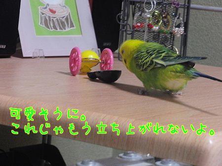 f0196665_8405936.jpg