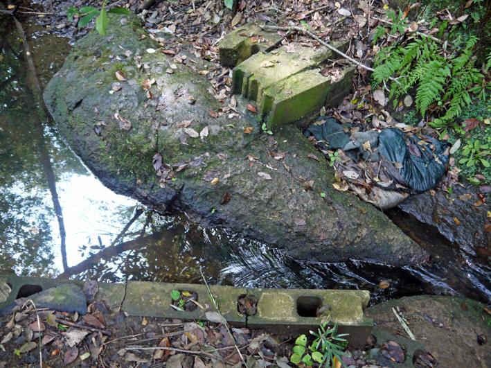 ひどい、台峯・谷戸の池が本当の蓮田になっちゃった10・26_c0014967_16131380.jpg